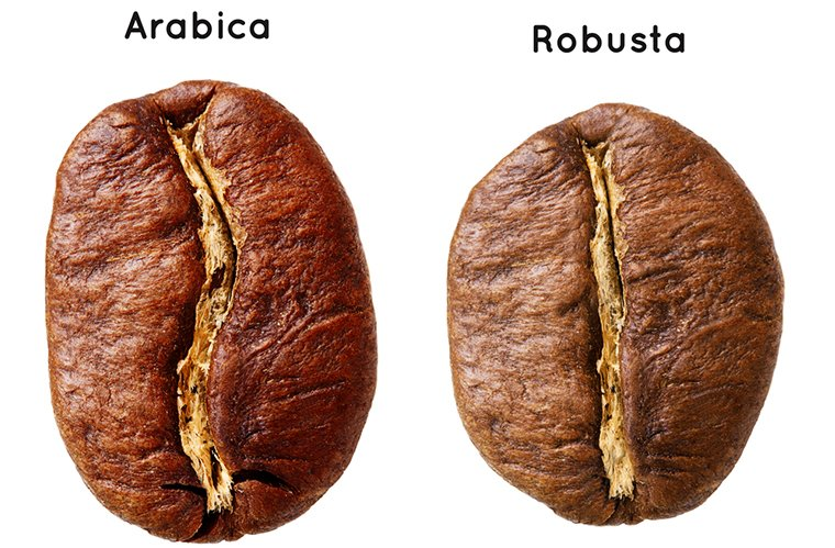 Arabica Vs Robusta | What's the Difference and facts?